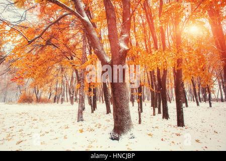 Ottobre mountain foresta di faggio con la prima neve invernale Foto Stock