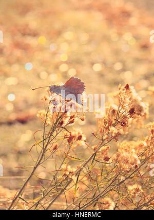 Un singolo, frost-refilato golden leaf poggia su fiori secchi contro un oro scintillanti sullo sfondo. È autunnale nel sentire e dell'oggetto. Foto Stock