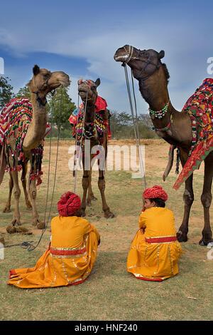 Camel, cammelli, dromedario, dromedari durante il Festival di elefante,Jaipur, Rajasthan, India Foto Stock