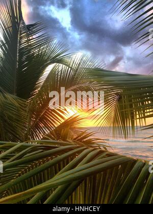 Tramonto su Seven Mile Beach, Giamaica. Visto attraverso un albero di palma. Foto Stock