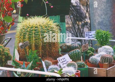 I cactus sul display in un negozio di fiori nel mercato di Borough, Londra (stile vintage) Foto Stock