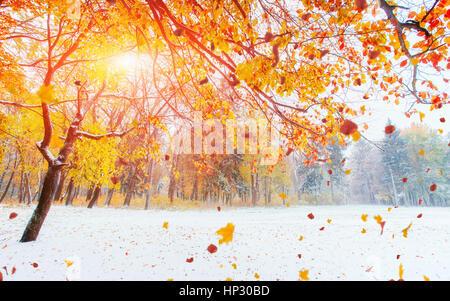 Ottobre mountain foresta di faggio con la prima neve invernale. Foto Stock