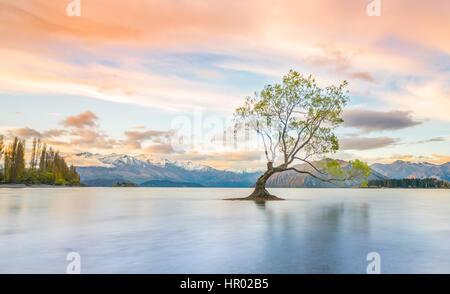 Sunrise, singolo albero in piedi in acqua, il lago Wanaka, Il Wanaka Tree, Roys Bay, Otago Southland, Nuova Zelanda Foto Stock