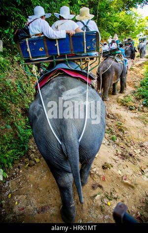 Escursioni a dorso di elefante attraverso la giungla in Thailandia Foto Stock