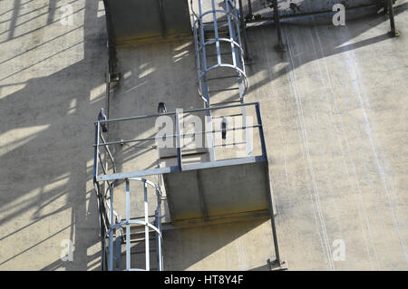 Tre piccioni arroccato su una parete montata stair Foto Stock
