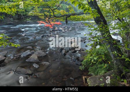 Colori dell'Autunno lungo il fiume Oxtongue, Oxtongue Rapids Park, Ontario, Canada