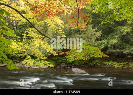 Colori dell'Autunno lungo il fiume Oxtongue a Ragged Falls Provincial Park, Ontario, Canada