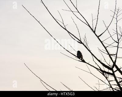 Un uccello si siede nella struttura ad albero al tramonto. Foto Stock