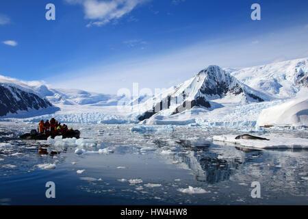 Leopard in appoggio di tenuta su ghiaccio floe, guardato da turisti, Penisola Antartica, Antartide Foto Stock