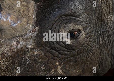 Ottimo pesce fiume riserva, SUD AFRICA: mozzafiato che mostra le immagini di un rinoceronte nero che appare a volare Foto Stock