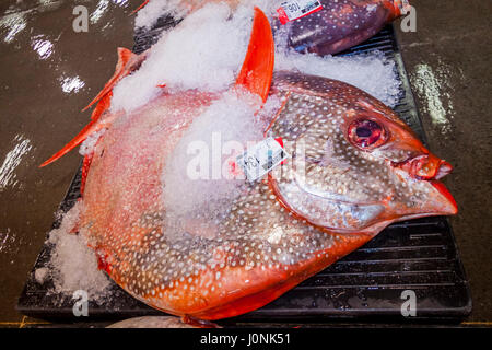 Moonfish all'asta del pesce, Lampris guttatus, Hawaii, STATI UNITI D'AMERICA