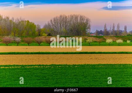 Vista sulla campagna con alberi e campo in righe, colori saturi Foto Stock