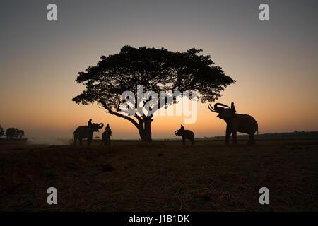 Silhouette tailandese elefanti sul campo e albero sullo sfondo di sunrise. Foto Stock