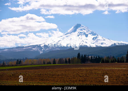 Campo Arato con i primi germogli di piante sullo sfondo dei campi, alberi, colline, montagne innevate e cielo molto Foto Stock