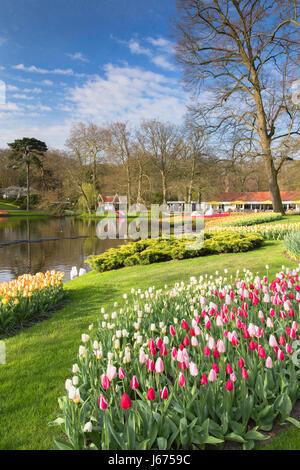 I tulipani in giardini Keukenhof Lisse, Paesi Bassi Foto Stock
