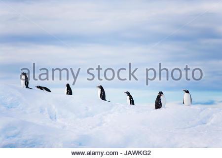 Pinguini sulla punta di un iceberg in Antartide. Foto Stock