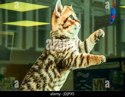 Gatto gioca con il mouse giocattolo vetrofania nella finestra di veterinario