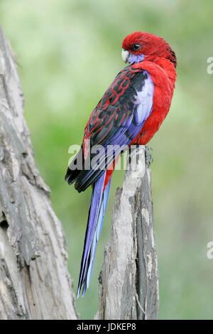 Wilson Promontorio di NP., Australia, Wilsons Promontory NP., Australien
