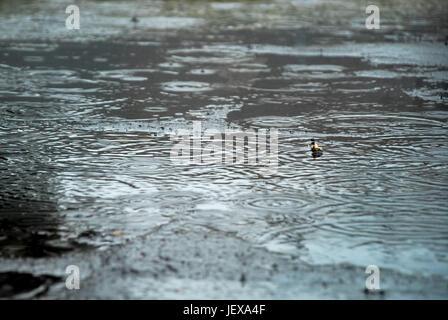 Portland, Dorset, Regno Unito. Il 28 giugno, 2017. Guardando le gocce di pioggia in pozze è stato il migliore il Foto Stock