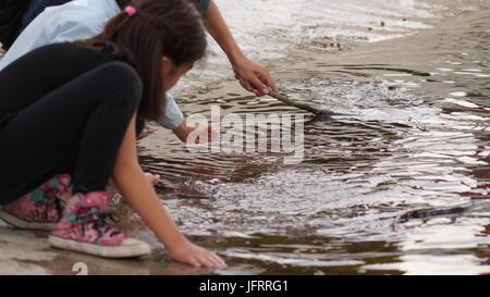 I bambini giocano sul lago Foto Stock