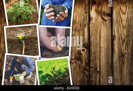 Lavorare in un orto, photo collage su sfondo di legno come spazio di copia Foto Stock