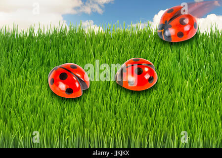 Tre ladybugs in erba verde.