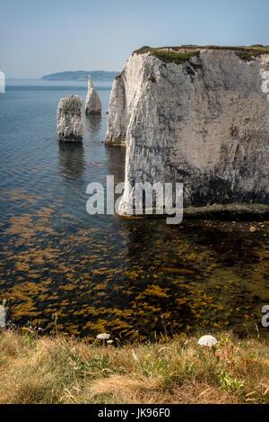 Old harry rocks, punto handfast, studland bay Foto Stock