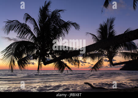 Palme durante il tramonto su una bella spiaggia tropicale di Koh Kood island in Thailandia Foto Stock