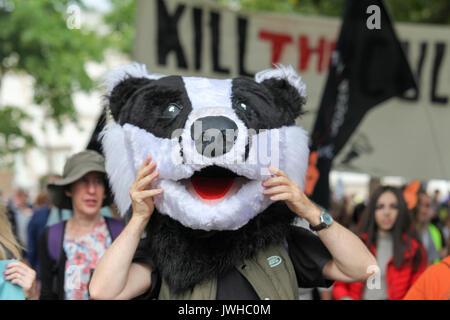 Londra, Regno Unito. 12 Ago, 2017. Il Badger Trust, il Fare Storia di caccia e di coalizione Care2 tenere un giunto Foto Stock