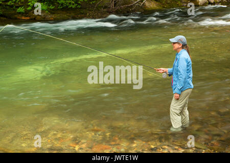 La pesca a mosca il fiume di Lewis, Gifford Pinchot National Forest, Washington Foto Stock