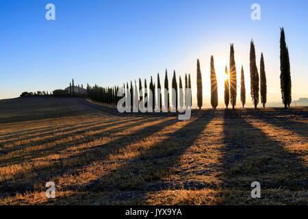 Paesaggio toscano con cipressi e cascina di sunrise, dawn, San Quirico d'Orcia, Val d'Orcia, Toscana, Italia Foto Stock