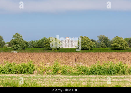 Grandi hamptons station wagon dietro un campo di mais in Bridgehampton, NY Foto Stock