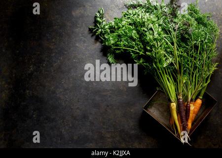 Le carote fresche su sfondo scuro Foto Stock