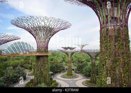 Prendere una passeggiata panoramica, 22 metri al di sopra del suolo, nel cuore della natura.
