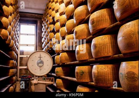 Tutto il parmigiano-reggiano di sedersi su scaffalature di stoccaggio durante il processo di invecchiamento accanto Foto Stock