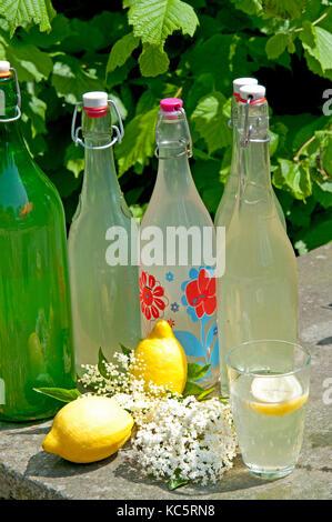 Più bottiglie di succhi biologici con lâ Elderflower e limone in piedi tra gli ingredienti. Foto Stock