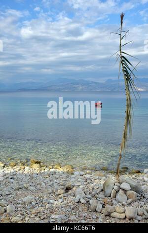 Una spiaggia di ciottoli nel mare mediterraneo sulla costa di Corfù vicino a kassiopi con una canna di bambù eretto Foto Stock