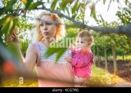 Madre con bambino di picking e di mangiare ciliegie in giardino Foto Stock
