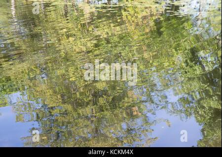 Riflessioni di alberi sulla superficie dell'acqua. Storrow Laguna, Esplanade in Boston MA Foto Stock