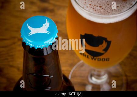 Una bottiglia di BrewDog Punk IPA si trova accanto al marchio BrewDog bicchiere riempito di birra (solo uso editoriale). Foto Stock