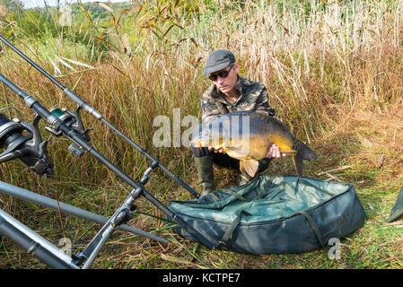 Le avventure di pesca, la pesca alla carpa. Specchio carpe, pesci di acqua dolce. Pescatore con una grande carpa Foto Stock