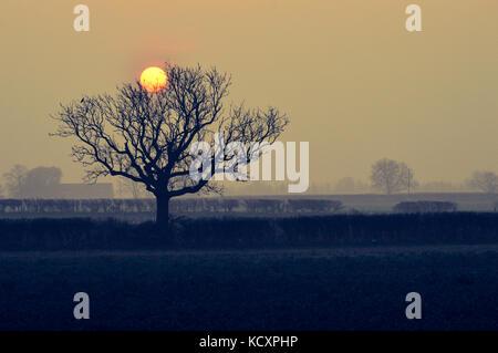 sole d'autunno Foto Stock