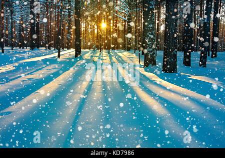 Inverno bellissimo paesaggio rurale con la foresta, sole e neve. Tramonto nel bosco invernale. raggi di sole risplendere attraverso gli alberi. sunrise invernale Foto Stock