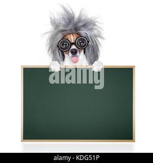 ... Smart ed intelligente di jack russell cane con occhiali nerd spuntavano  lingua indossando un capelli grigi c7028fe0683e