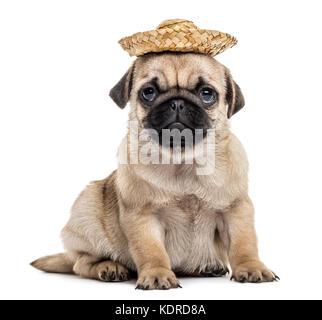 Pug cucciolo con un cappello, isolato su bianco Foto Stock