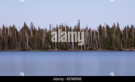 Alberi bianchita al grande lago della Willamette National Forest, Oregon Foto Stock