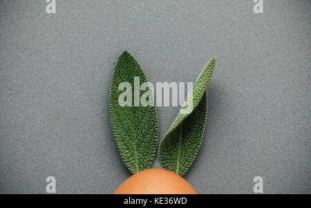 Coniglietto di pasqua orecchie realizzati da foglie di salvia . la minima nozione di pasqua su uno sfondo grigio Foto Stock