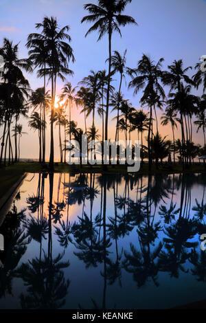 Wadduwa provincia occidentale dello Sri Lanka acqua Blu Hotel Palme riflessioni in piscina Foto Stock