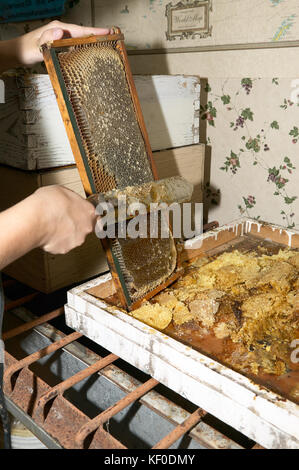Una chiusura di un apicoltore raccolta e raschiare via il dolce miele e nido su una Fattoria api. Foto Stock
