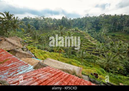 Riso tegalalang terrazza. tegalalang village, Bali, Indonesia. Foto Stock